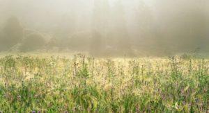 Лечебные травы Башкирии