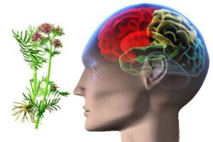 Уксус, мухомор и вишневый клей - с их помощью эпилепсию одолей