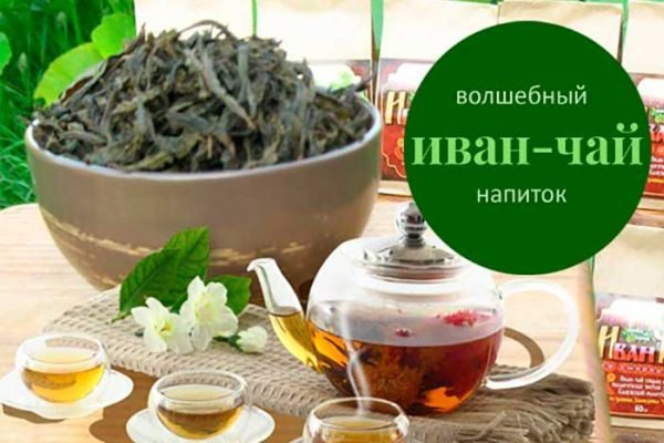 Трава Иван-чай лечебные свойства