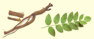 Солодка - самое древнее лекарство
